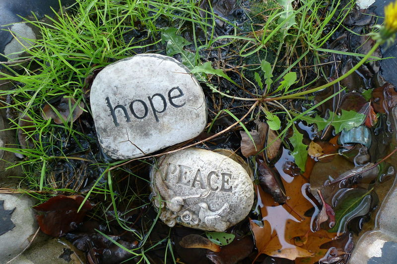 Close-up Communication Day Grass Hope And Peace Leaf Nature No People Outdoors Text