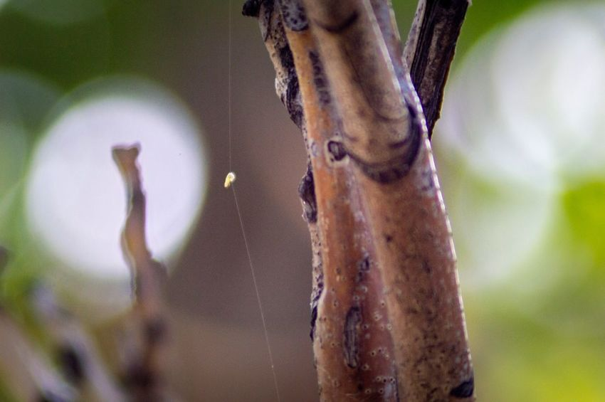 EyeEm Selects Focus On Foreground Plant No People Close-up Nature Day Tree Hanging Selective Focus