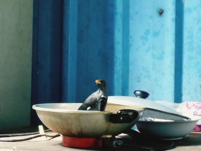 Hey...what's for lunch? Enjoying Life Humor Birds Animals Eyeem Philippines Birds Animal Themes Bird One Animal Perching No People Animal Wildlife Day Bowl Beak Tap Outdoors Close-up Food Nature