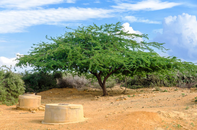 Wells in a desert region of Colombia used by the indigenous Wayuu for water in La Guajira City Colombia Country Countryside Day Desert Dry Earth Environment Ground Guajira Laguajira Land Landscape Nature Nobody Outdoors Outside Rural Scene Summer Town Tree View Well