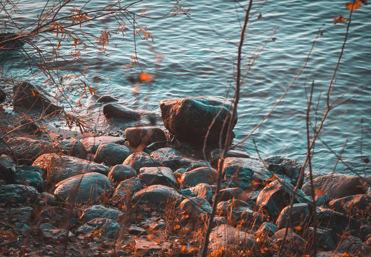 Last autumn days. Autumn Tree Plant Nature No People Day Outdoors Beauty In Nature Tranquility Leaf Branch Water Stone Rock Golden Hour Coastline Land Beach Rock - Object Ventė Cape Lithuania Many Stones Nature View End Of Autumn Day Time Solid Rippled