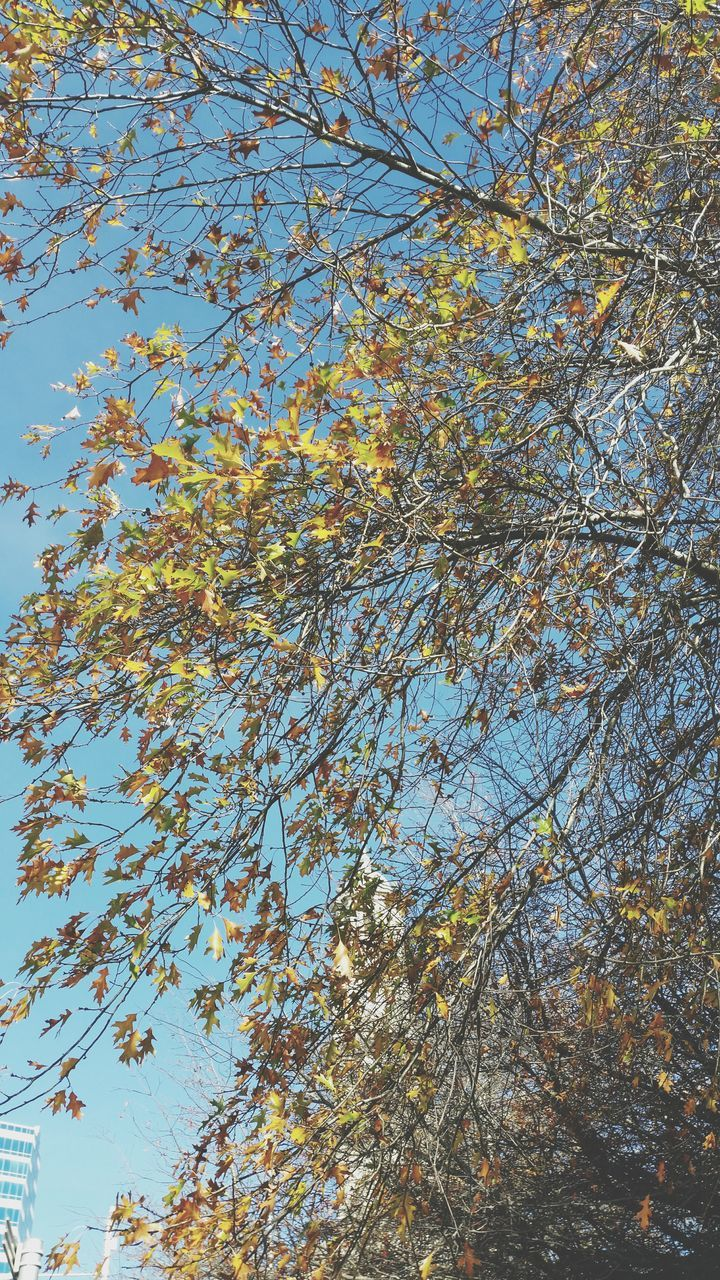 low angle view, branch, tree, nature, beauty in nature, growth, day, no people, leaf, tranquility, outdoors, flower, autumn, sky, freshness, clear sky, fragility, close-up