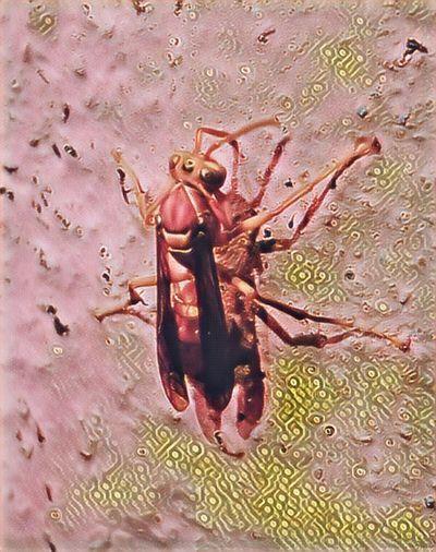 Randomclicks📷 Micro Photography One Animal Beetles Life Yellow Bee HoneyBee The Week On EyeEm