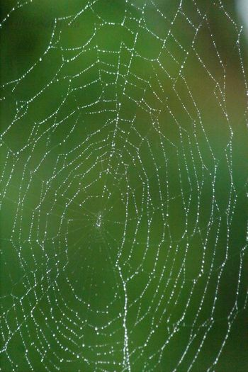 Check This Out Spiderweb Canon1200DPhotography Indroda Waterdrops