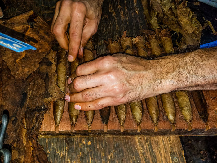 Cropped Hands Making Cigar