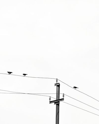 Breathing Space Cable Power Line  Electricity  Power Supply Electricity Pylon Bird Technology Connection Day Silhouette Telephone Line Flock Of Birds Outdoors No People Low Angle View Animals In The Wild Animal Wildlife Fuel And Power Generation Sky Parallel The Week On EyeEm