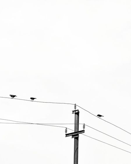 Breathing Space Cable Power Line  Electricity  Power Supply Electricity Pylon Bird Technology Connection Day Silhouette Telephone Line Flock Of Birds Outdoors No People Low Angle View Animals In The Wild Animal Wildlife Fuel And Power Generation Sky Parallel The Week On EyeEm The Street Photographer - 2018 EyeEm Awards