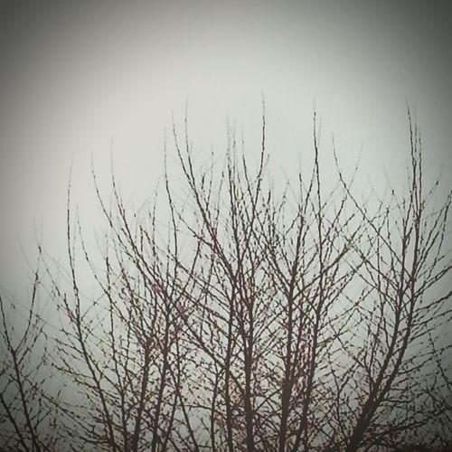 Winter Trees Sky Beautiful View Goodmorning Saturdaymorning Hello World