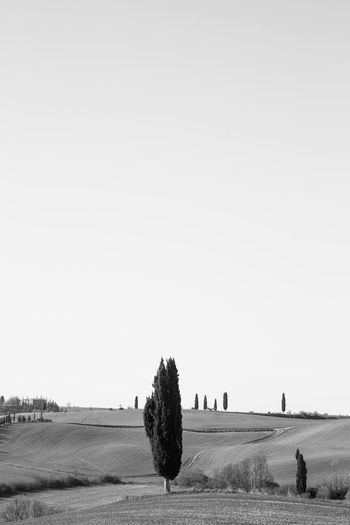 Sky Landscape Land Environment Field Nature Scenics - Nature Tranquil Scene Outdoors Plant Tranquility Tree Clear Sky Beauty In Nature Copy Space No People Rural Scene Day Agriculture Grass Crete Senesi Pienza Val D'orcia Tuscany Tuscany Hills Tuscany Countryside Cypresses Road