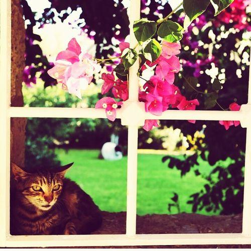 Bir Kedi Gördüm Sanki Çok Tatlı Güzellikk Kedicik 🐈
