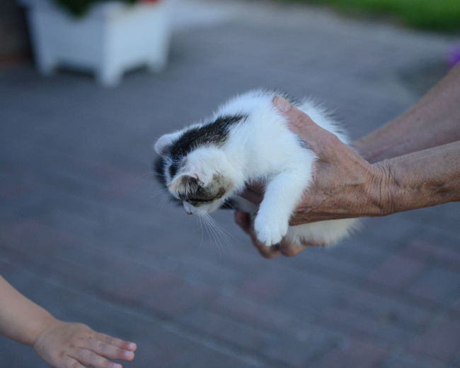 Hands Holding Cat Depth Of Field Kids Hand Farm Kitten Small Kat Baby Kat