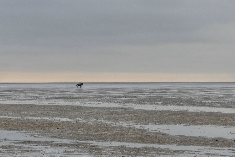 Northsea Outdoors Mudflat Sea And Sky Seaside Horse One Person People From My Point Of View Taking Photos Nature Animals Perspective Relaxing Beautiful Nature Seascape Landscape Hidden Gems  People And Places in Germany Nordseeküste