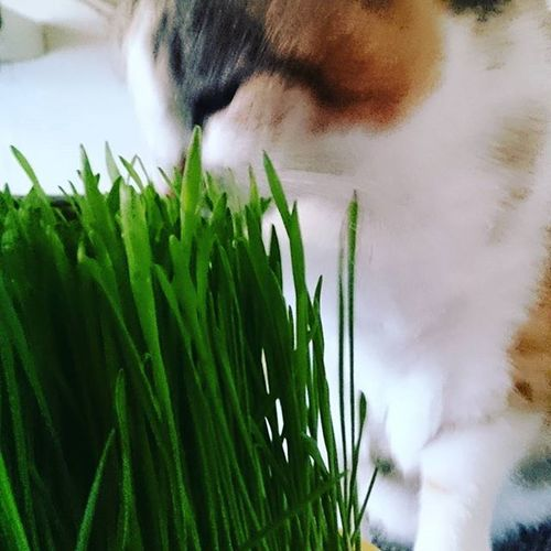 The Grass is greaner on the Otherside Catsofinstagram Cats Catstagram Catworld Cats_of_instagram Catlover Sweetcat Caturday Justmeow