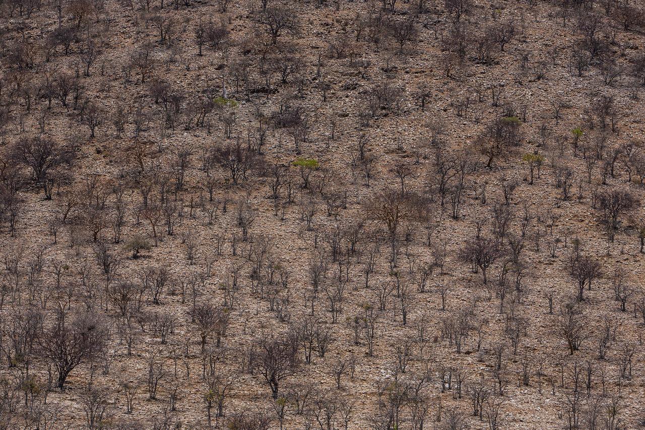 Full Frame Shot Of Trees On Land