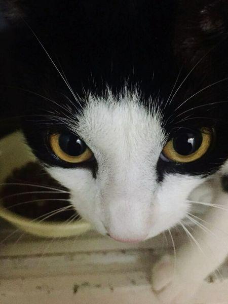 Cat Animal Cloesup Horror