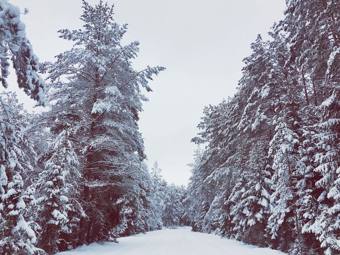 winter silence Winter Trees Snow Cold Temperature Tree Outdoors Nature No People