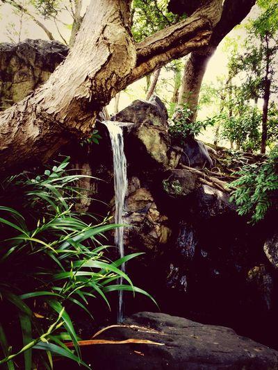 Japanese Garden Plants Water_collection EyeEm Nature Lover