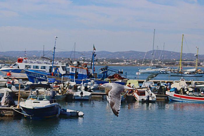 Birds EyeEm Birds Seagulls Flying Seagull SEAGULL IN FLIGHT Boats Fish Fishing FishEyeEm Fishing Boat