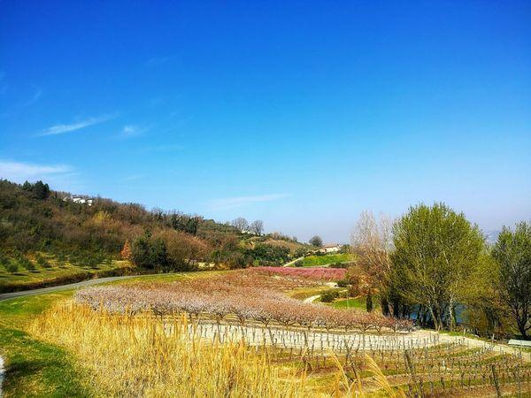 Primavera Campo Di Grano Blue Sky Tree Agriculture Sky Irrigation Equipment Agricultural Equipment Tranquil Scene
