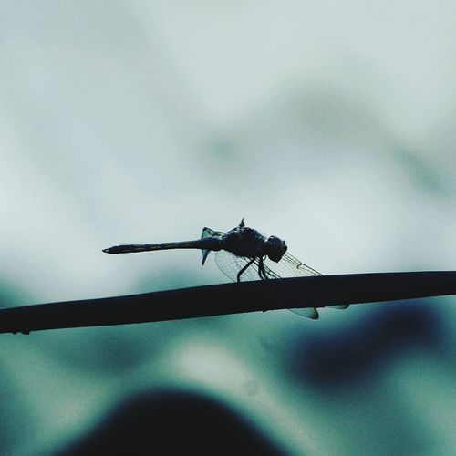 Insect Animals In The Wild Animal Wildlife Animal Themes No People Day One Animal Outdoors Close-up Nature Damselfly