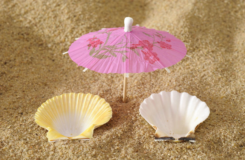 two shells as deckchairs and parasol at sunny beach Bed Deck Chair Deckchairs Holiday Lounger Tranquility Abstract Beach Close-up Concept Leisure Leisure Activity Mussel Nature No People Ocean Outdoors Parasol Sand Sea Shell Sunshade Sunshine Tranquil Scene Vaccation