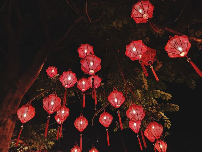 Illuminated red lanterns hanging on tree