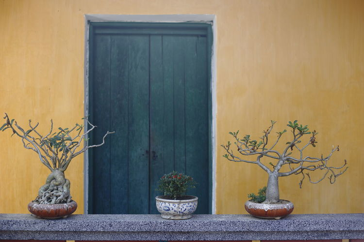 Three potted plants in front of a rustic house