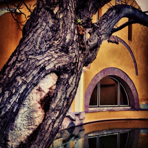 Art Mimics Hugging A Tree Water Reflections The Press - Treasure Green Force