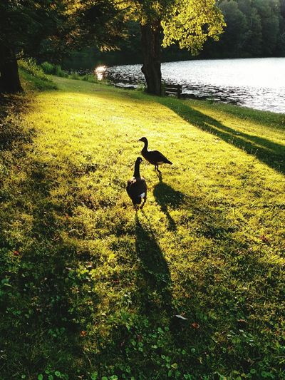Lake View EyeEm Nature Lover Relaxing Time On The Lake Ohio Signsofsummer No Filter Geese
