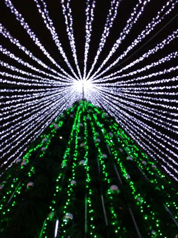 Cristmas tree Low Angle View Green Color No People Pattern Illuminated Nature Night Outdoors Sky