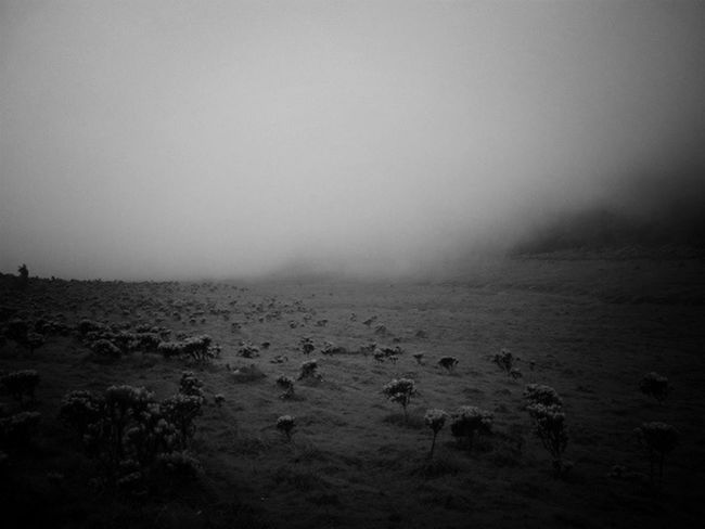 dream the impossible dream.. Blackandwhite Mist This Is Indonesia Gunung Gede