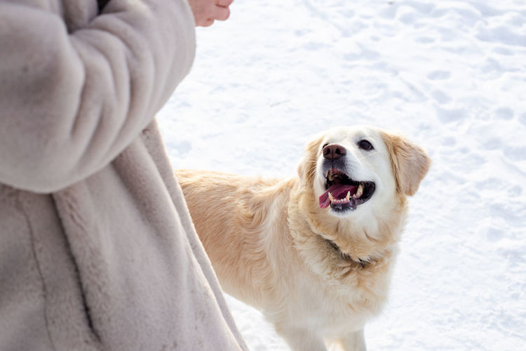 View of dog standing on snow