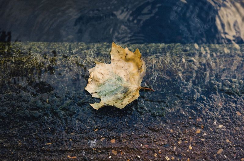 High angle view of autumn leaf on riverbank