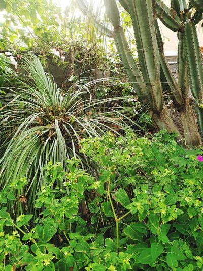 Leaf Close-up Plant Green Color Plant Life Green Greenery Botany Vegetation Flora Botanical Grassland