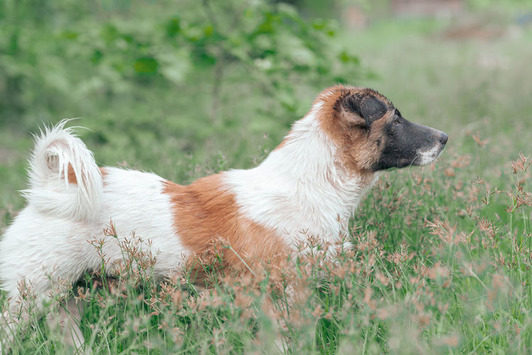 One Animal Animal Themes Animal Pets Mammal Dog Domestic Canine Domestic Animals Vertebrate Field Grass Land Plant No People Nature Day Side View Looking Selective Focus Outdoors Profile View Looking Away Dogs Of EyeEm Dog Photography Dog Portrait Dog Relaxing
