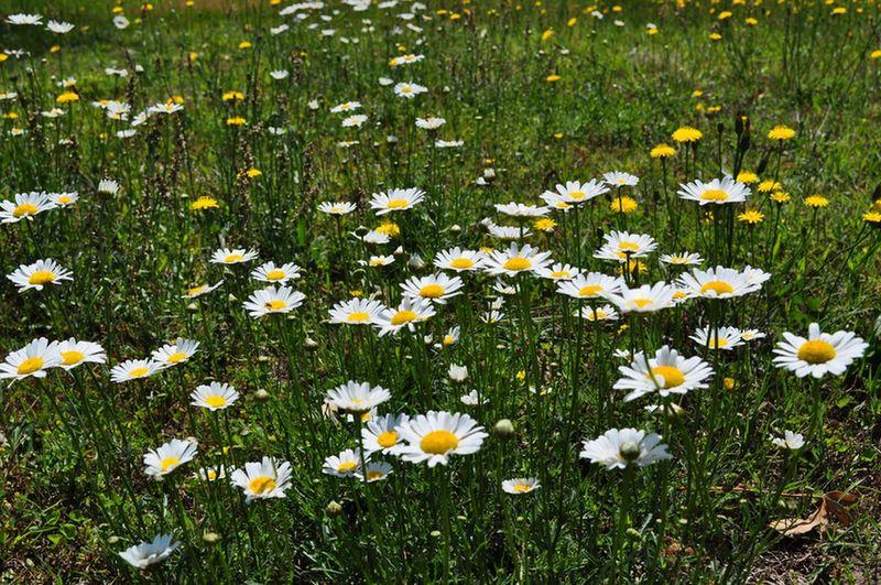 Wildflowers Nature Eyem Nature Lovers  Outerbanks Showcase: January 🌼