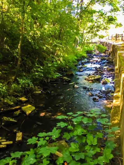Hidden beauty EyeEm Nature Lover Mill Stream Man Made Beauty Industrial Landscapes Mill Stream Water Plant Leaf Plant Part Tree Nature Green Color Water Plant Leaf Plant Part Tree Nature Green Color Reflection No People Outdoors Tranquility Flowing Water