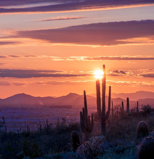 Scenic view of sunset with saguaro cactus silhouette