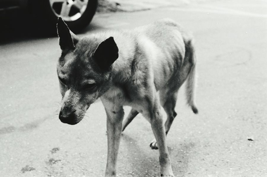 Monochrome Black & White Shades Of Grey Monochrome World Film Photography Film Is Not Dead 35mm Film Getting Inspired Animal Themes Domestic Animals Streetphotography Illness Monochrome Photography Om10 Film135 Black And White Friday Be. Ready.