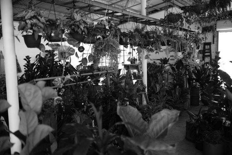Black & White Black And White Blackandwhite Business Finance And Industry Choice Close-up Day Fujifilm Greenhouse Hanging Indoors  Monochrome Nature No People Plant Tree Variation