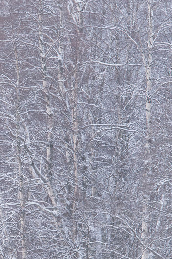 Backgrounds Bare Tree Beauty In Nature Close-up Cold Temperature Day Fragility Full Frame Nature No People Outdoors Textured  Tree Shades Of Winter
