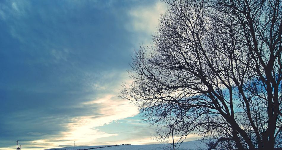 Sky Cloud - Sky Bare Tree Beauty In Nature Low Angle View Tranquil Scene Tree Scenics No People Branch Silhouette Peace Cloud Formations Popular Photos Exceptional Photographs See The World Through My Eyes EyeEmBestPics EyeEm Best Shots EyeEmNewHere Art Is Everywhere Eyeem Market Winter