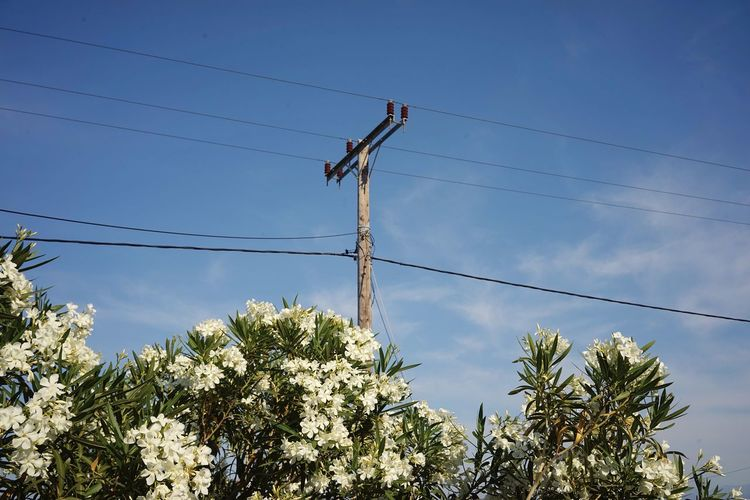 Low Angle View Sky Plant Tree Nature Day Electricity  Cable Electricity Pylon Power Line  Outdoors Technology Power Supply