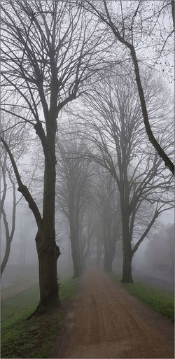 Foggy morning in the park of Moers, NRW, Germany Foggy Mornings NRW NRW, Beauty In Nature Fog Foggy Morning Foggy Morning On River Foggy Morning Over River Foggy Morning Over The Water Land Nature No People Nrw Germany Outdoors Park View Plant Tranquil Scene Tranquility Tree