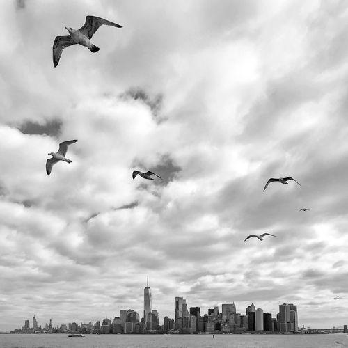 Manhattan skyline 😀 NYC City NYC Photography Skyline Cloud - Sky Sky Flying Mid-air Architecture Vertebrate Nature Bird City Day Water