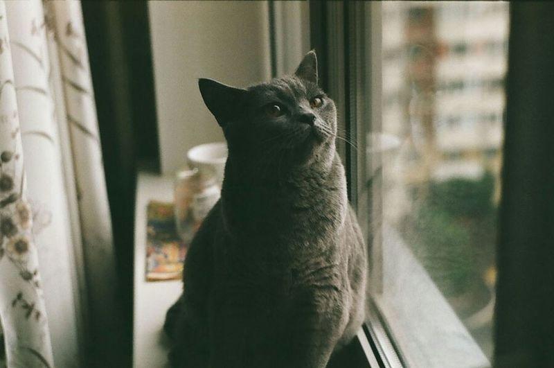 Cat looking away