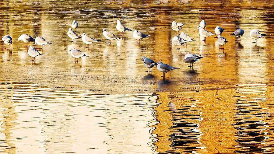 43 Golden Moments Bird Photography Eye4photography  Malephotographerofthemonth EyeEm Best Shots Lake View EyeEm Nature Lover Naturelovers
