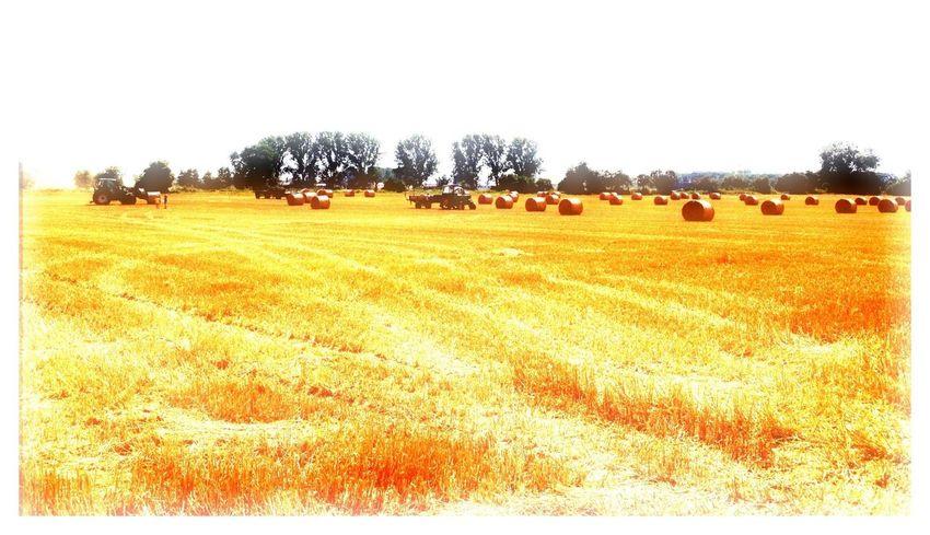 eErnte Harvest Landwirtschaft Farm