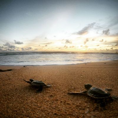 Baby Babyturtle Backpacking Beach Beauty In Nature Day Gopro Horizon Over Water Nature No People Outdoor Outdoors S Sand Scenics Sea Shore Sky Sunset Tranquil Scene Tranquility Turtle Vacation Vacations EyeEmNewHere