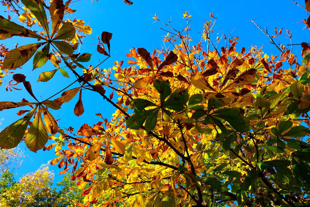 plant, growth, beauty in nature, low angle view, sky, plant part, leaf, tree, flowering plant, autumn, flower, nature, branch, no people, vulnerability, yellow, fragility, day, freshness, sunlight, outdoors, change, springtime, maple leaf
